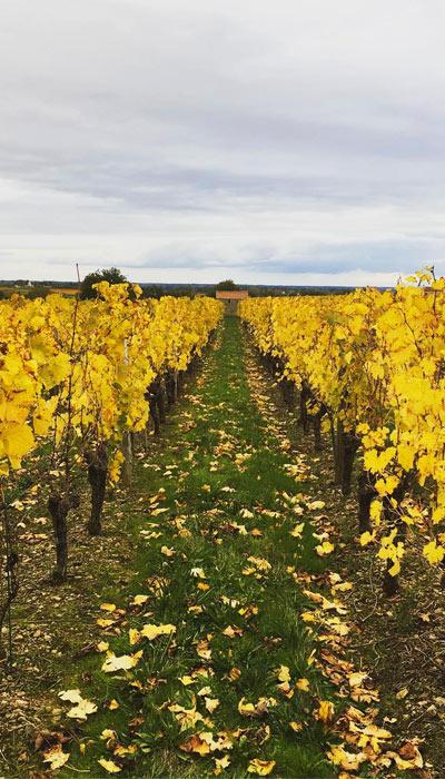 Nos vignes à Trémont - Domaine de Villeneuve, Famille Lefort